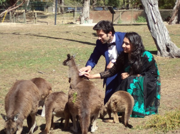 Indian TV stars Aditya and Pankhuri feeding Kangaroos in Melbourne