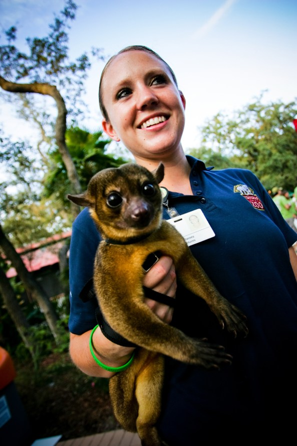 Animal Interactions at Tampas Lowry Park Zoo