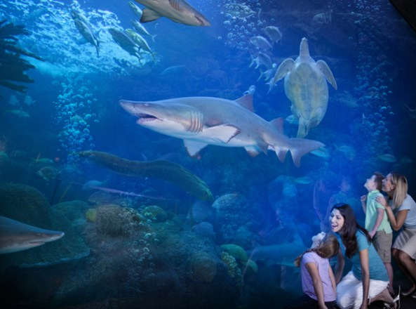 A family at Florida Aqarium