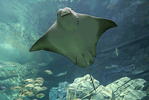 Ray-Bay-Featured-Animals