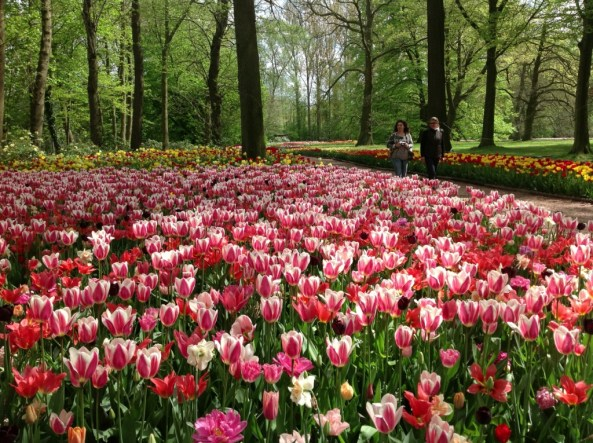 Photo: Floralia Brussels