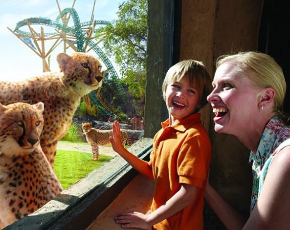 Photo: Busch Gardens
