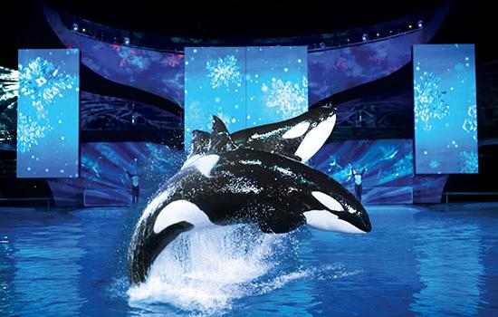 SeaWorlds Celebration