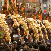 Elephants will be part of Thrissur Pooram