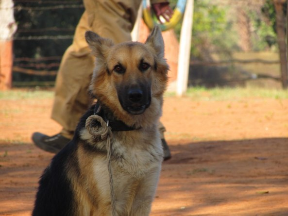 Sniffer_Dogs2