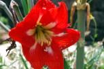 Kausani-Flowers12