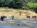 Elephants coming from everywhere