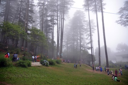 Eco Park amidst deodar trees!