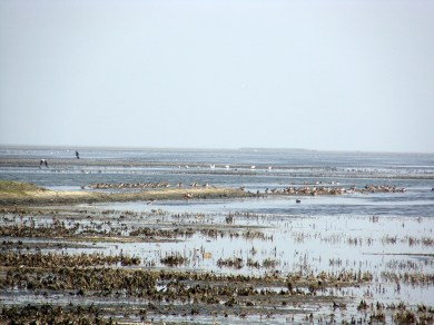 Everywhere around, you can find a colony of migratory birds at Chilika