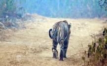 Sariska Safari5
