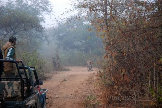 Sariska Safari13
