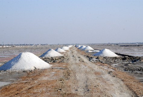 Salt fields in Sambhar
