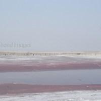 The Pink Salt...