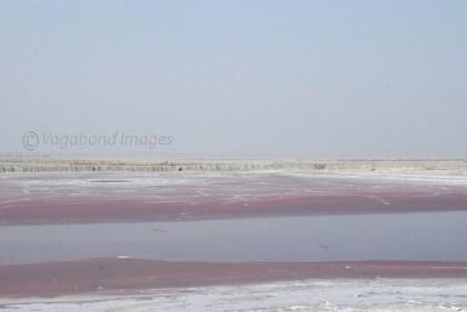 Pink Salt19