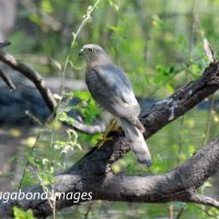 Guiding their territories : Birds at Keoladeo