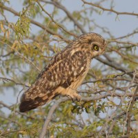 Menar again, for owls and vultures this time