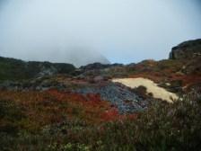 On the coast of California. My souls sighs through the mist, and I taste the sea.