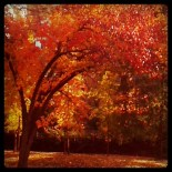 Fall in the Central West End, St. Louis
