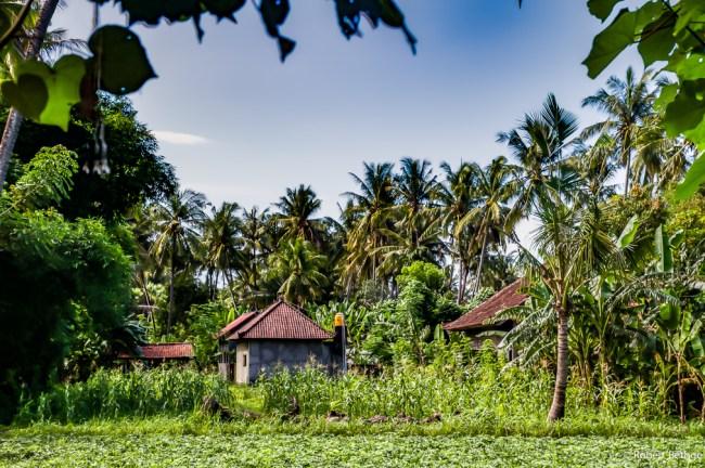 Paradise found: East Bali - Jungle lodge in Eastern-Bali