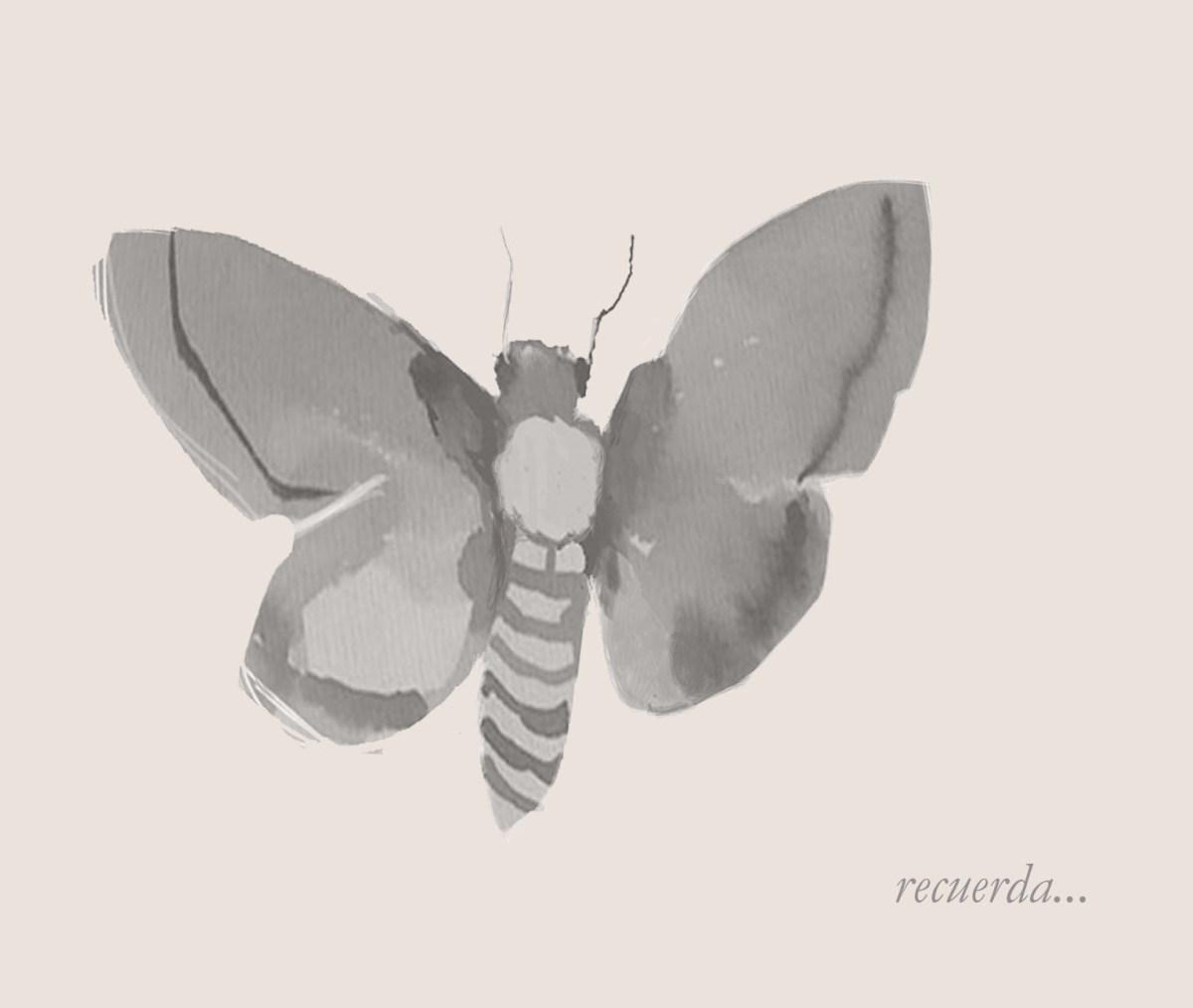 A la precisa velocidad de las mariposas