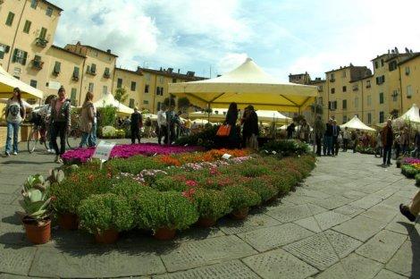 Puestos de flores en la Plaza del Anfiteatro de Lucca