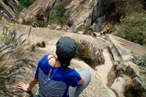 Lemures paseando a cuatro pasos de distancia en la Reserva de Anja