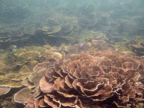 Buceando en la barrera de coral de Ifaty