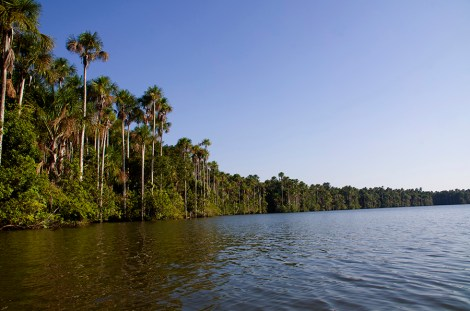 Lago Sandoval en la reserva Tambopata