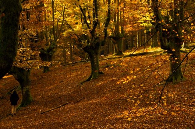 El otoño es la estación ideal para visitar el hayedo de Otzarreta