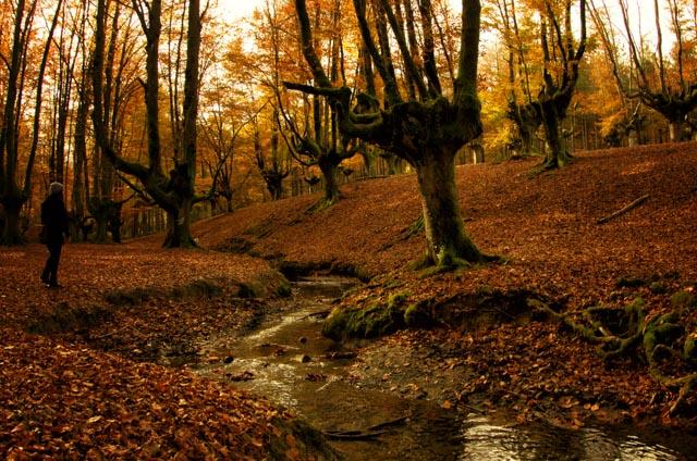 Las ramas hacia el cielo, las hojas por doquier y las aguas cristalinas del río