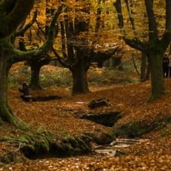 El riachuelo no lleva una gran corriente de agua, pero aún así aporta un extra al encanto del hayedo Otzarreta, Euskadi