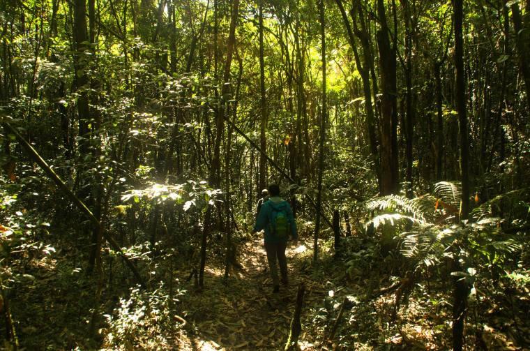 Welcome to the Jungle!! Paseíto fácil por el parque de Ranomafana, en Madagascar