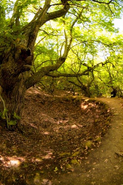 El camino que une la ruta de las Valiñas por las minas con la senda Perimetral atraviesa frondosa vegetación, también característica del paisaje de las Médulas