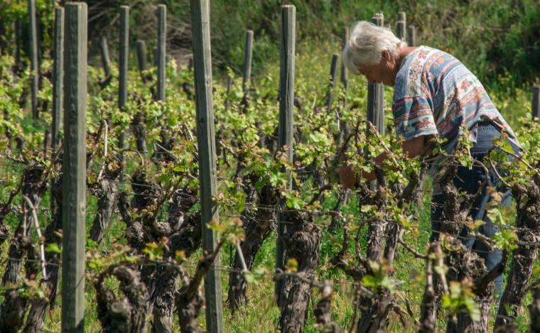 El espacio para los viñedos no es excesivamente grande: 3 hectáreas con 9 variedades de uva con las que producen 6 vinos