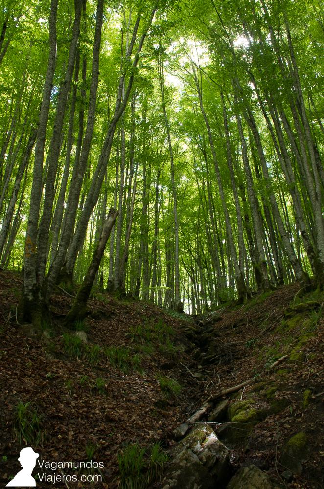 Ruta por la selva de Irati, dando la vuelta al embalse de Irabia