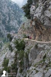 El tramo central de la ruta del Cares es el más impresionante, con el camino tallado en el desfiladero de piedra