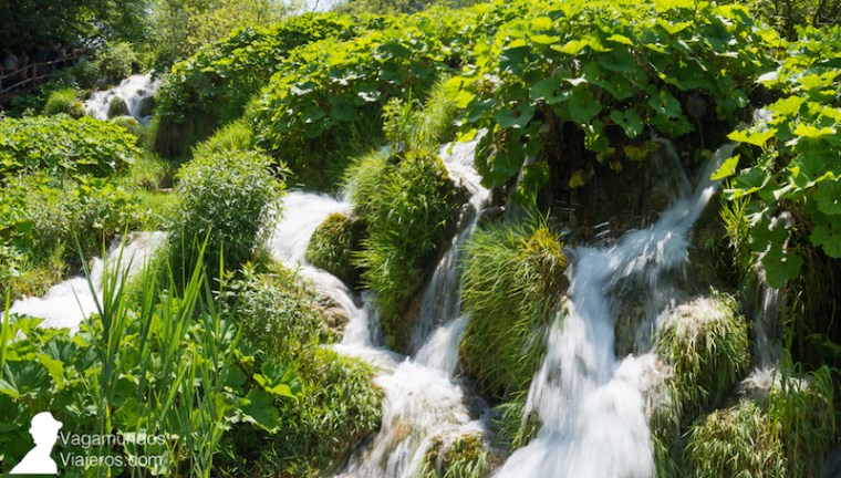 El travertino es responsable de gran parte de las cascadas y canales de agua en Plitvice: es un tipo de roca formado por la acumulación de las sales que arrastra el agua tras filtrarse por la roca caliza presente en la zona