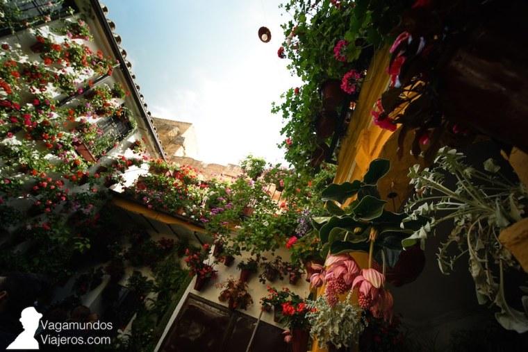 Martín de Roa 7, entre los premiados en la modalidad de patio tradicional en el concurso de Patios 2018, Córdoba