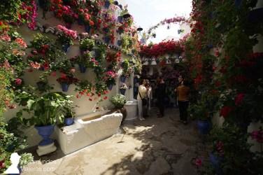 Postrera 28, en el barrio San Basilio, uno de los premiados en la modalidad de patio tradicional en el concurso de patios de 2018 en Córdoba