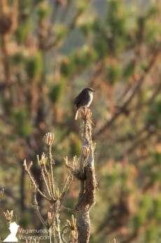 La sierra de la Culebra en Zamora es un gran lugar para avistar diferentes especies de aves