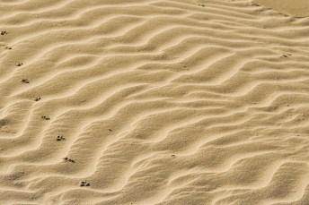 Las dunas son uno de los ecosistemas que forman el Parque Nacional de Doñana