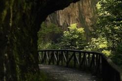 Recorriendo a pie la Senda del Oso en Asturias