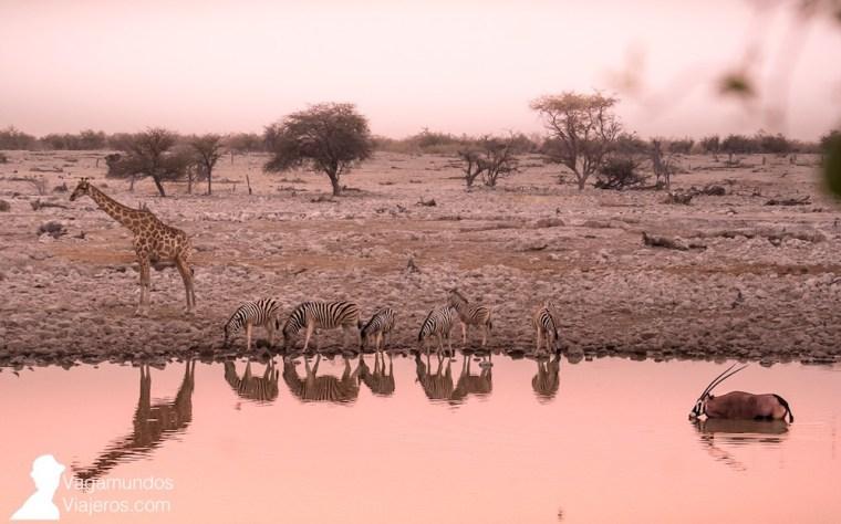 Atardecer en la charca de Okaukuejo, en Etosha, Namibia