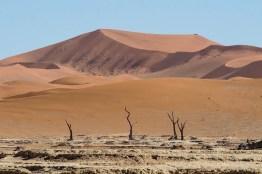 Las acacias deshidratadas de Deadvlei con las dunas de Sossusvlei de fondo, en el desierto de Namibia