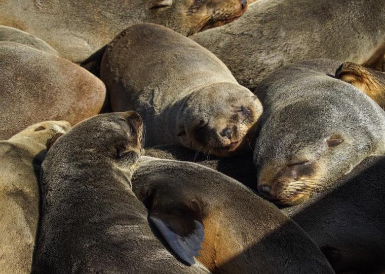 Donde quiera que mires en Cape Cross, hay decenas de leones marinos juntos