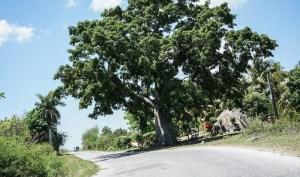 Paisajes desde la carretera en Cuba