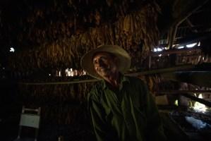 Nino, el agricultor de una de las plantaciones de tabaco de Viñales, Cuba