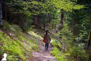 Senderos en el monte cercano al castillo Neuschwanstein