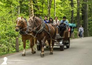 Coche de caballos para subir al castillo Neuschwanstein desde Hohenschwangau
