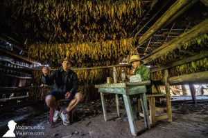 Visitando una plantación de tabaco en Viñales, Cuba